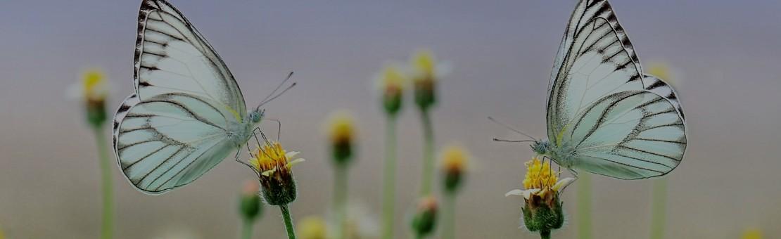 Relax'Papillon